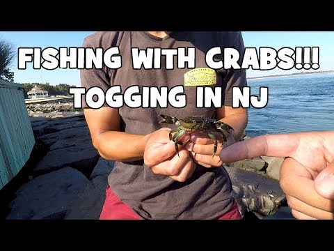 Fishing with CRABS?! TAUTOG (Blackfish) SLAYFEST at the INLET! (Barnegat Light, NJ)