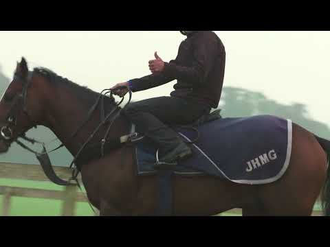 Warren Hill Newmarket - The Busiest Racehorse Gallops in Britain