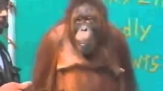Обезьяна фокусник  Супер прикол! Реально смешное видео(, 2013-10-12T13:17:30.000Z)