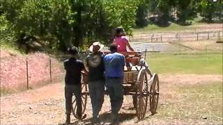 Riding In Style In A Buckboard Wagon