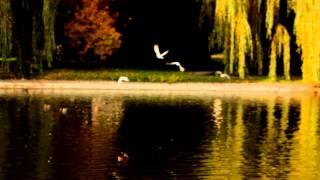 EDUARDO ACOSTA -  YO VI UN ANGEL - VIDEO OFICIAL - HD