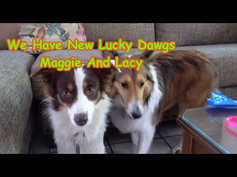 We Have New Lucky Dawgs Maggie And Lacy
