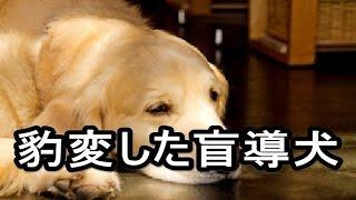 [感動する話] 豹変した盲導犬[泣ける話] 心に響きましたら高評価&コメ...