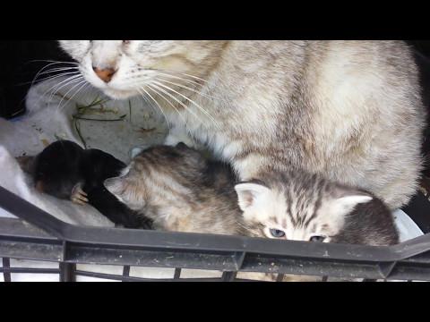 Guardate mamma gatta che ha portato ai gattini