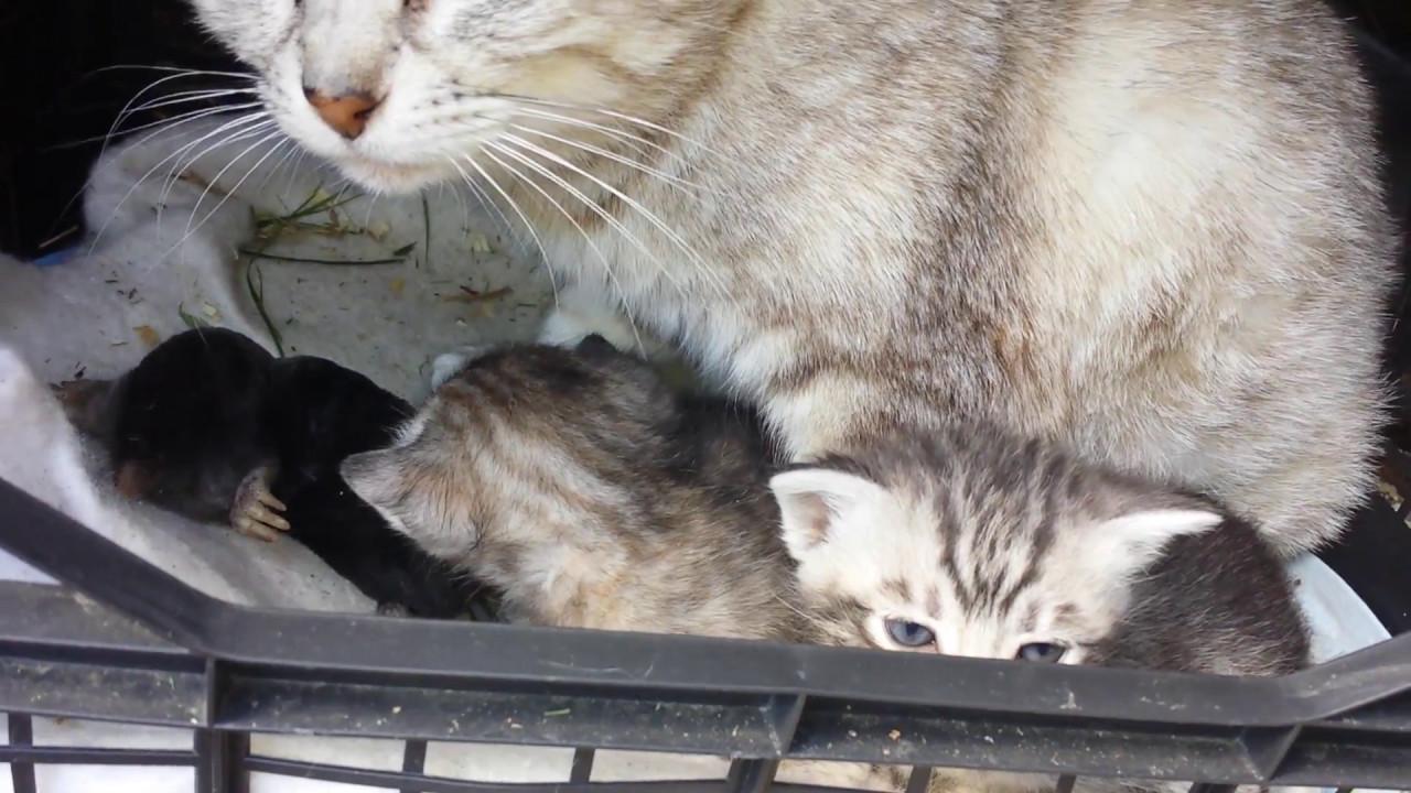 Guardate Mamma Gatta Che Ha Portato Ai Gattini Youtube