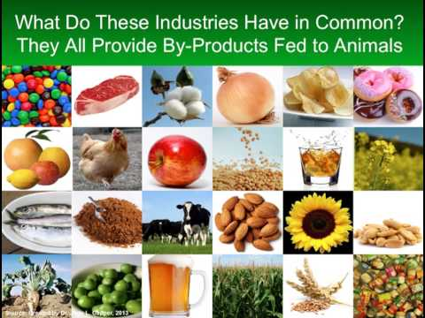 CAST Issue Paper 53 - Animal Feed vs.Human Food