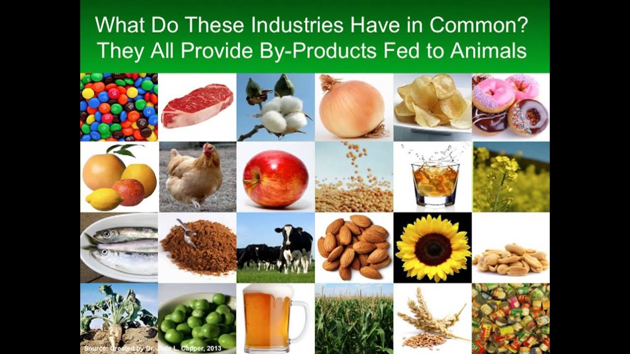 cast issue paper 53 animal feed vs human food youtube