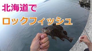北海道でロックフィッシュ シマソイ・エゾメバル【釣り#15】