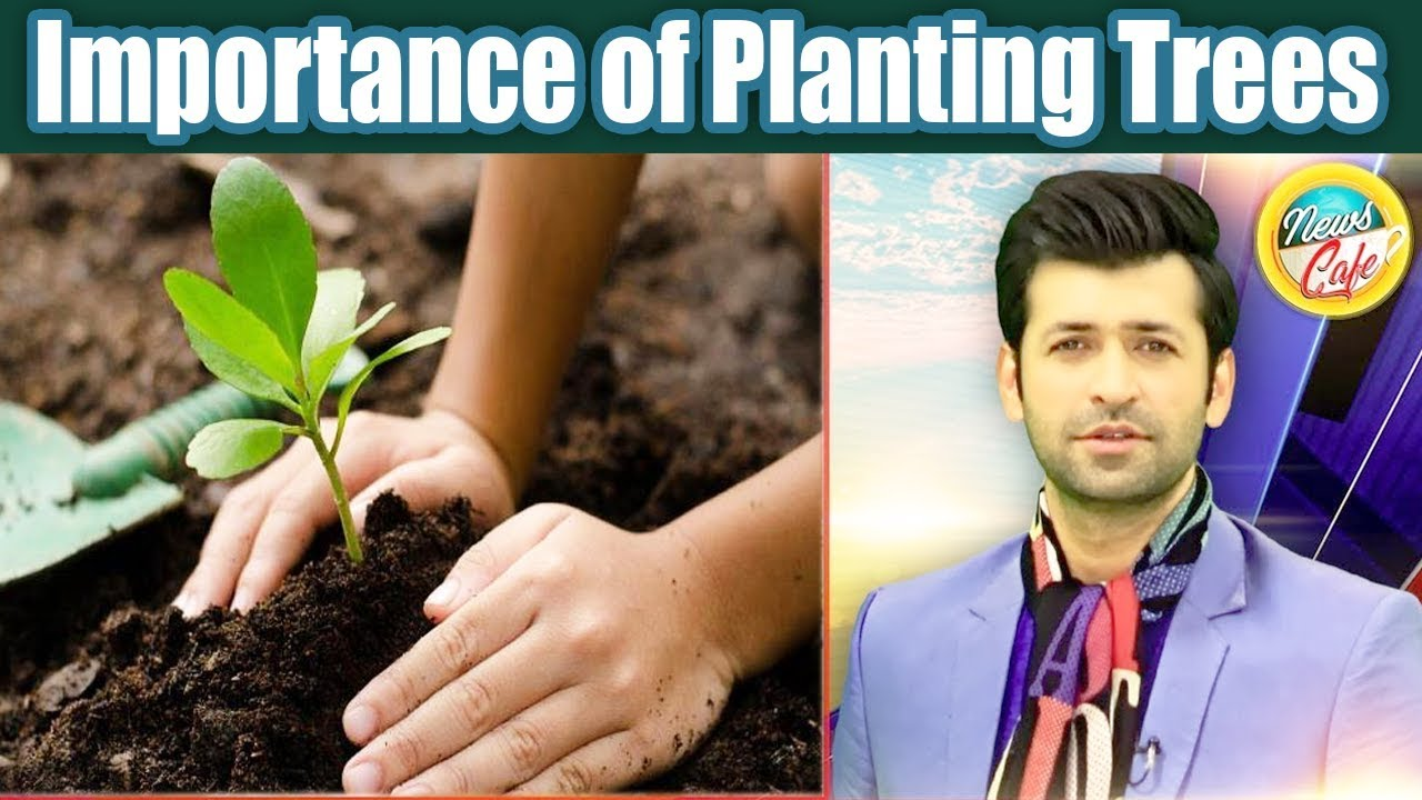 Importance of Planting Trees | News Cafe | 25 June 2019 | AbbTakk