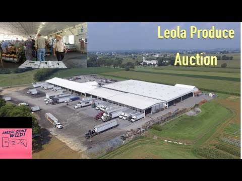Leola Amish Produce Auction A Truck Drivers Perspective