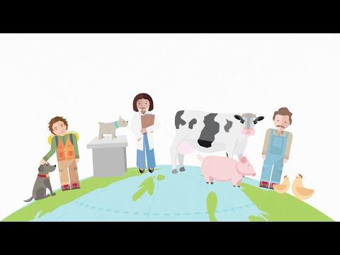 Animation: Animal Health Motion Graphic