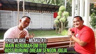 Main Kerumah Om Tito boss burung Dream Sengon Jogja