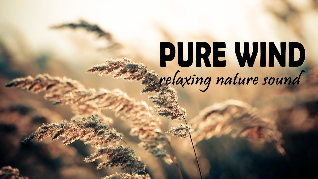 3 HOURS PURE REAL SOUND of WIND - Natural Music to RELAX, YOGA, MEDITATION