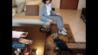 Θετική εκπαίδευση σκύλων ,Χαλκίδα,yorkshire Terrier.www.dog-training.gr