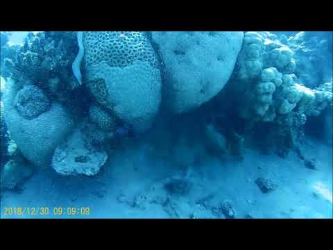 Diving In The Red Sea From Eilat-Israel