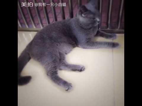 I breed white cat, he raised the gray cat! #Cat#