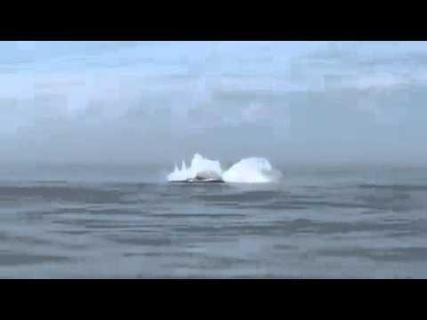Baleia Em Macaé
