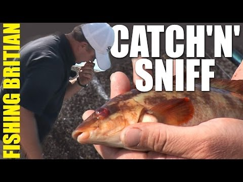 Stinky Fishing - Beachcasting Bait Tips