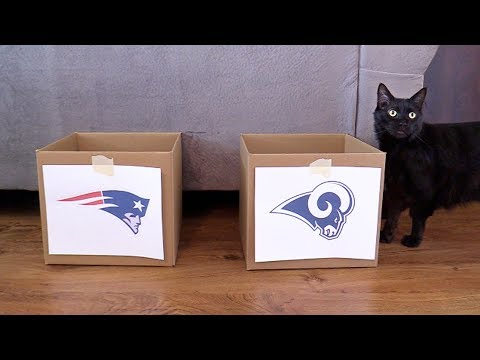 Lucky Black Cat Predicts Super Bowl 2019 WINNERS!