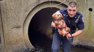 Cool Cops &  Amazing Cops Rescues || Top Compilation