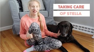 Taking Care of Stella - Dog Care Routine