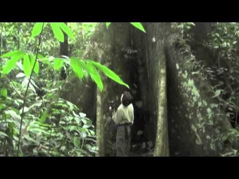 Peru, Amazon Rainforest