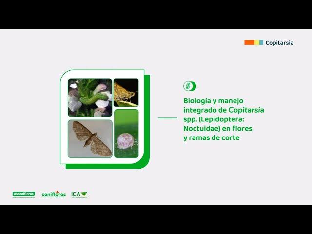 Biología y manejo integrado de Copitarsia spp. en especies ornamentales de corte