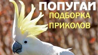 Попугаи прикольно танцуют, поют, разговаривают (приколы про попугаев)