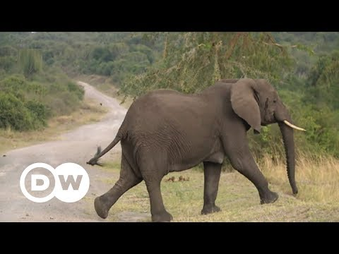 Turning elephant dung into paper | DW English