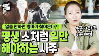 평생 소처럼 일만 해야 살 수 있는 사주팔자일을 안하면 병마가 찾아온다?! 몸이 고단해도 움직여야만 덜 아픈…