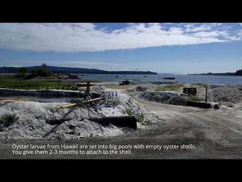 Fanny Bay Oysters Plant Tour - Comox Valley BCSSF 2017 [Travelling Foodie]