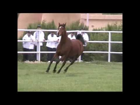 Memories of Syria - Pt 5 - Syrian National Stud