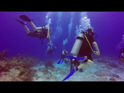 Scuba Diving - Cozumel - Dive #1 - Dec 8, 2016