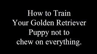 Teaching Your Golden Retriever Not To Chew - Free Mini Course - Biting Visitors- Aggressive Behavior