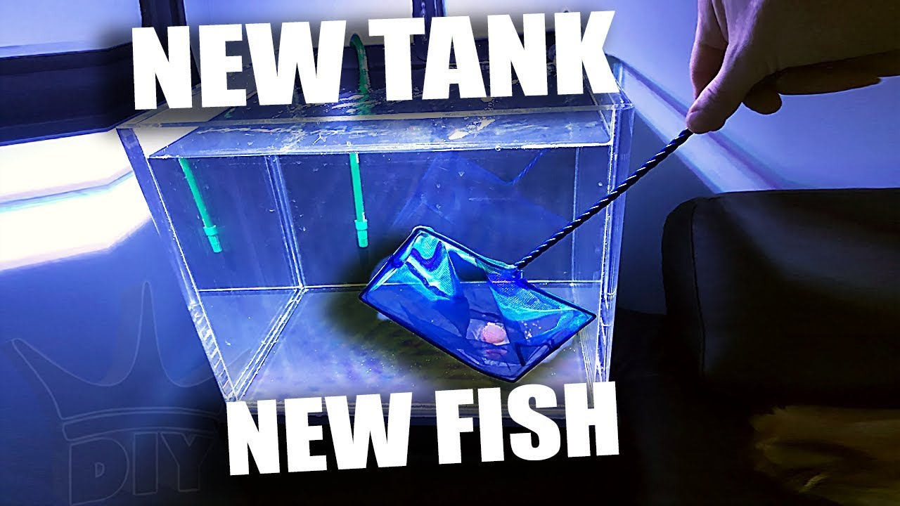 new-tank-for-the-new-fish