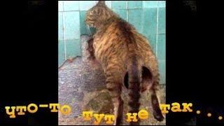 Приколы животные. Неудачные фото(коты)