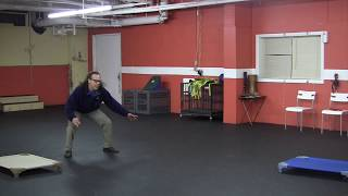 Aggressive Dog Rehab W/low Level Remote Collar Training