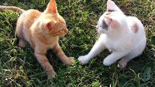 Video Kucing Lucu Bermain gemes banget