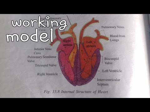 ✔👍😊Working heart model || blood heart science project || 10th class ||science fair heart .