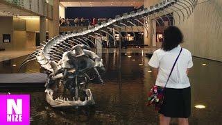 Titanoboa - Monsterschlange aus der Urzeit!