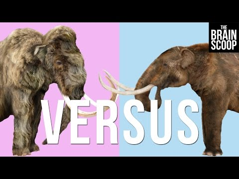 Mammoths vs. Mastodons: Can we 'de-extinct' them both?
