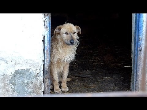 Thumbnail: Rescue of a Sad Dog Who Forgot To Live
