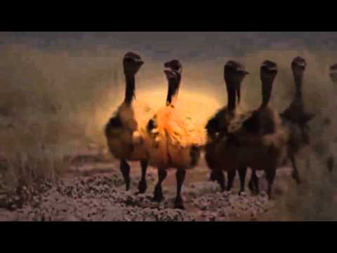 Africa Episode 1 Kalahari with David Attenborough   Document