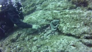 Дайвинг на Тенерифе с осьминогом