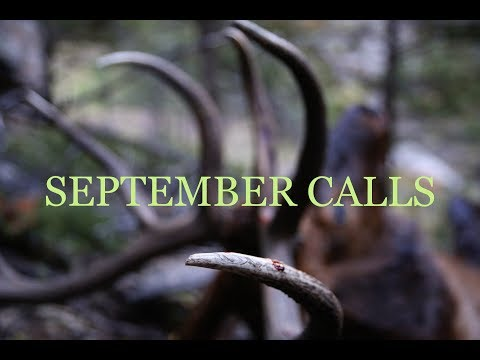 September Calls – Archery Elk Hunting Bull Elk in Montana
