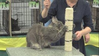 """Выставка кошек """"Теплые коты"""" в Твери 2017"""