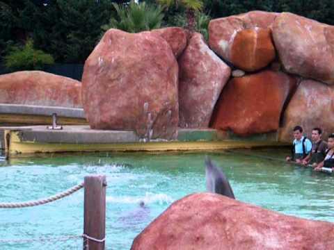 Video rencontre avec les dauphins marineland