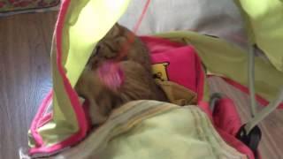 Как себя ведет кошка 5 месяцев
