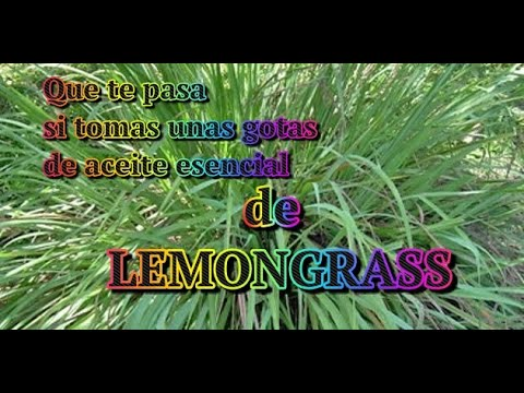 que-te-pasa-si-tomas-unas-gotas-de-aceite-esencial-de-lemongrass