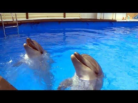 Севастопольский дельфинарий лишился дельфинов